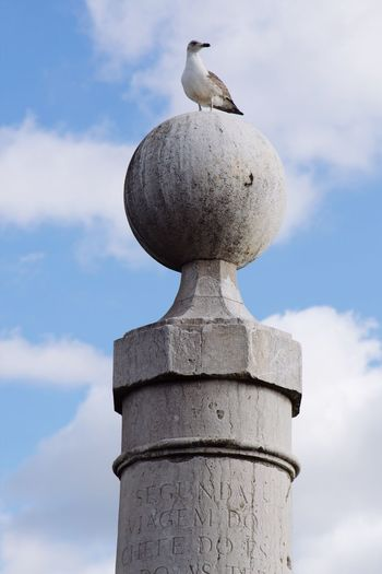 Low angle view of seagull perching on stone structure against sky