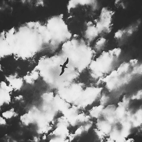 A bird in the clouds... Freedom Bird Flying High Clouds And Sky Black And White Photography Les Lecques La Madrague Beauty In Nature The Week On EyeEm