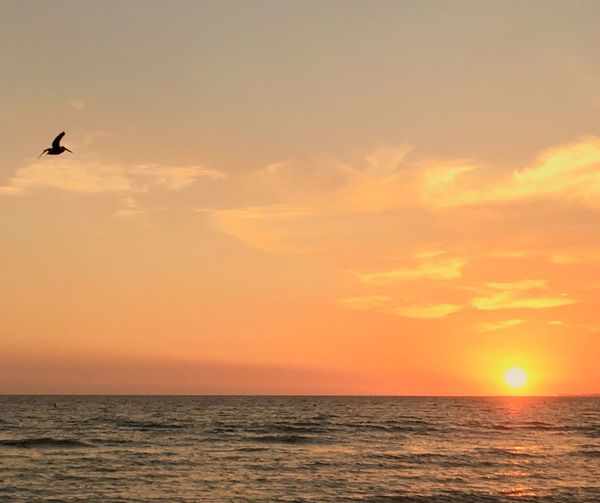 Sunset Sea Horizon Over Water Beauty In Nature Scenics Nature Sky Tranquil Scene Orange Color Bird Water Idyllic Tranquility Flying Silhouette Sun No People Outdoors One Animal Animal Themes EyeEmNewHere Travel Destinations Beach Shore Breathing Space