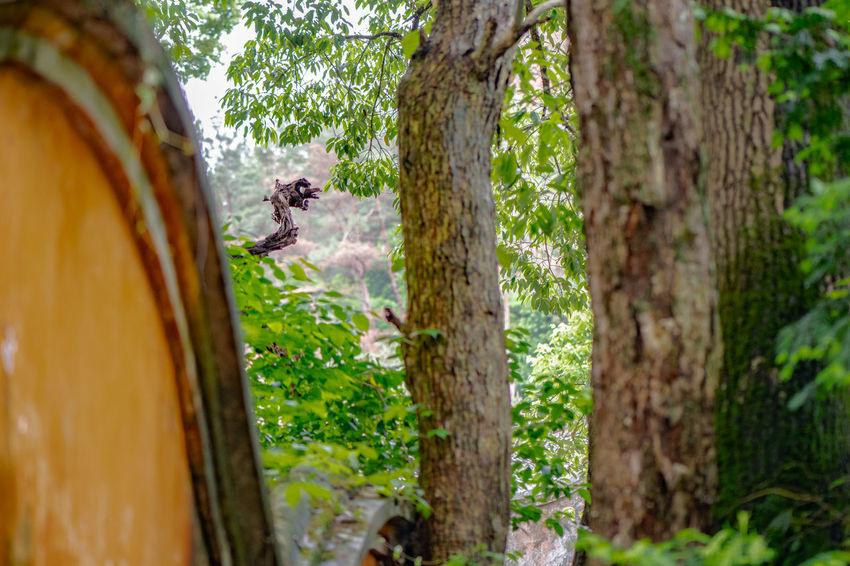Ziseetheworld Ziwang Chinese Chinese Culture Green Green Color Fall Acrobat Acrobatics  Acrobatic Activity Buddha Image Buddha Statues Buddha Temple Buddhism Forest Mountainpeak Jiuhuashan Mountain China Zhejiang,China Dragon Dragon Sculpture Sculpture