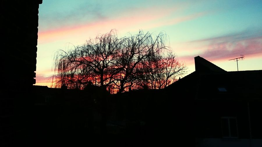 Vue de ma fenêtre - mars 2015