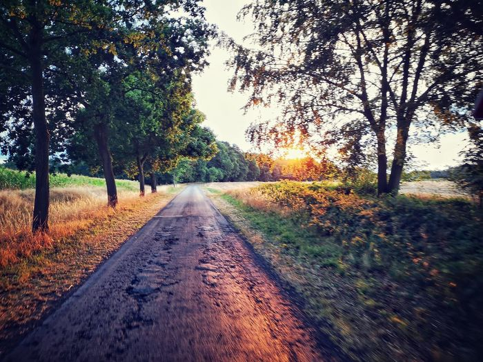 When I cycling in the morning light Eyemphotography Eyem Best Shots Cycling Bycicle Tree Autumn Road Leaf Branch Diminishing Perspective Sky Landscape Empty Road Road Marking Pathway Walkway Path Woods Asphalt