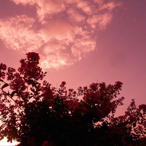 Gulabi Asmaan Gulabi Beautifulskyseries Balochistan Spring Bloom Blossom Pink vsco vscocam ig_pakistan igers_pakistan vzcopakistan im_pakistan floralepiphany flowers floral Sky sunset