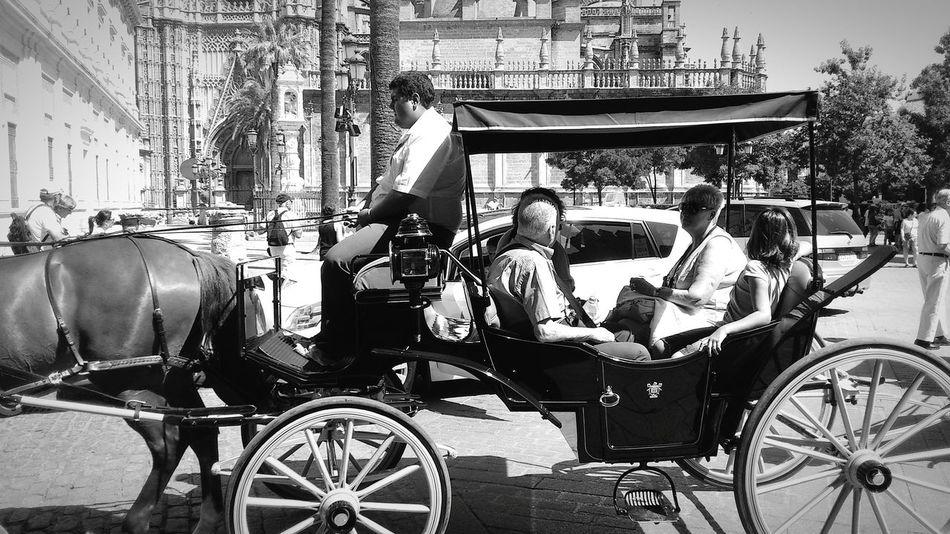 Cool ride. Carriage Ride Sevilla Black And White Explore City