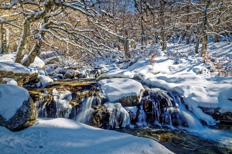 Winter Cold Temperature Snow Tree Beauty In Nature Nature Scenics - Nature Water Frozen Plant Snowcapped Mountain Tranquility Ese Plateau D'ese Riviere Neige👌👊❄️⛄️ Corsica ❤️