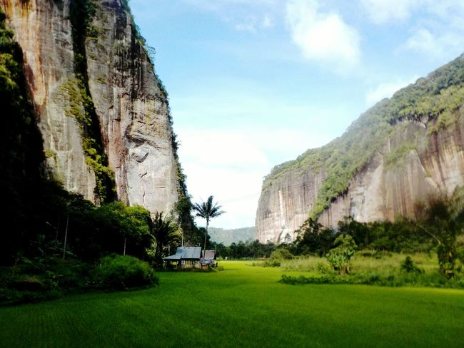Valley Valley View Open Landscape Field Sumatera Sumatra  Rice Paddy Rock Formations