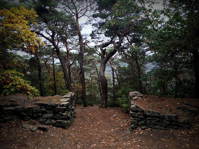 Nature Pfälzerwald Heidenlöcher Wald Wood Rheinlandpfalz