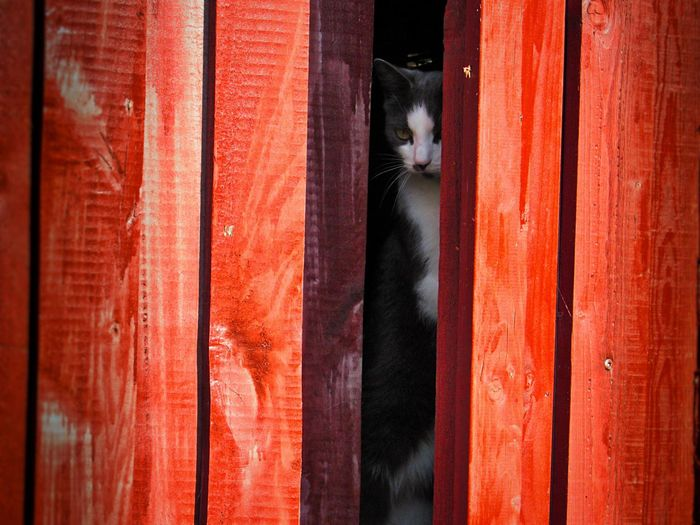Lurking in the shadows. Domestic Cat One Animal Mammal Pets Animal Themes Domestic Animals No People Outdoors Denmark Nature Animals Animal