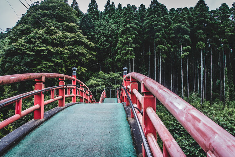 Japan Lovers Atmosphere Colour Of Life EyeEm Best Shots EyeEm Nature Lover Japan Nature Perspective Bridge Day Enjoying Life Forest Growth Landscapes Mountain Nature Naturelovers No People Outdoors Travel Destinations Tree Travel Beautiful Nature Relaxing Red The Week On EyeEm Been There. Connected By Travel Lost In The Landscape Perspectives On Nature