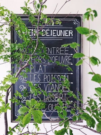 Blackboard  French Food Leaf Communication Plant Part No People Growth