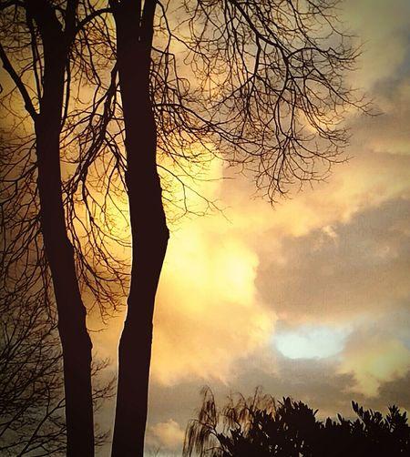 Trees Tree Sunburst Velbert Photos Official EyeEm © Velbert Forest Photography Forest Forest Path
