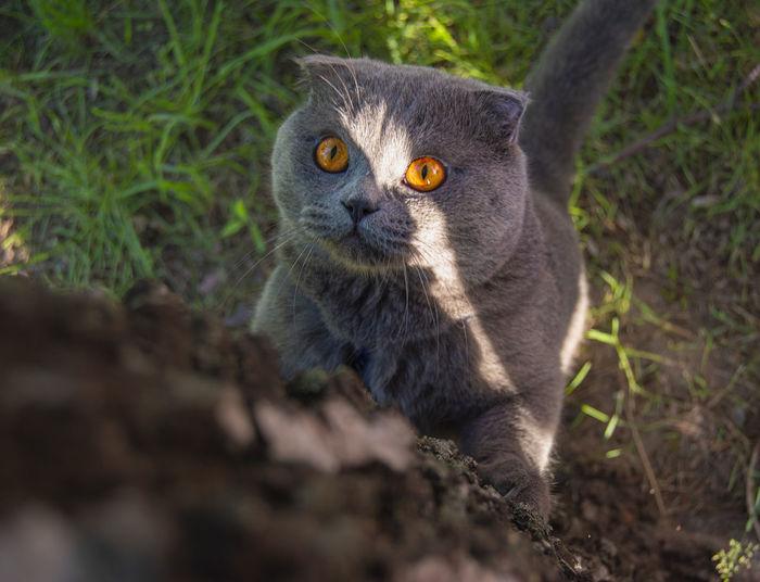 Close-up portrait of cat on plant