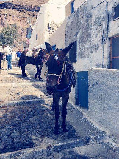 GREECE 🇬🇷 Travel First Eyeem Photo