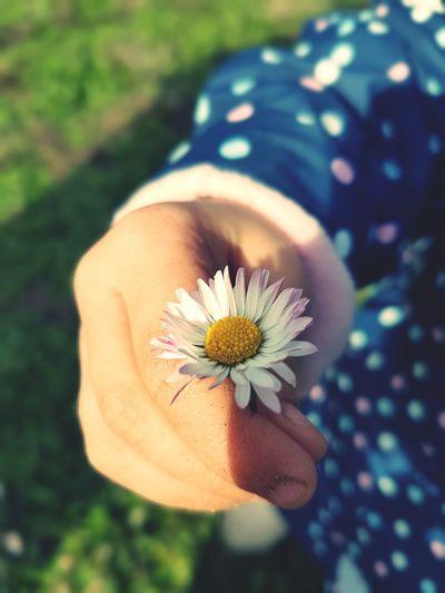 Autumn Peaceful Childhand Human Hand Flower Head Flower Women Portrait Springtime Uncultivated Close-up Plant Wildflower Daisy A New Beginning