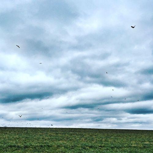 Field Birds In Flight Onefineday Neverending BlueGreentheme Flying Bird Fly Away Grassy Green Upstateny Homeland Scattered TakeOff Fingerlakes