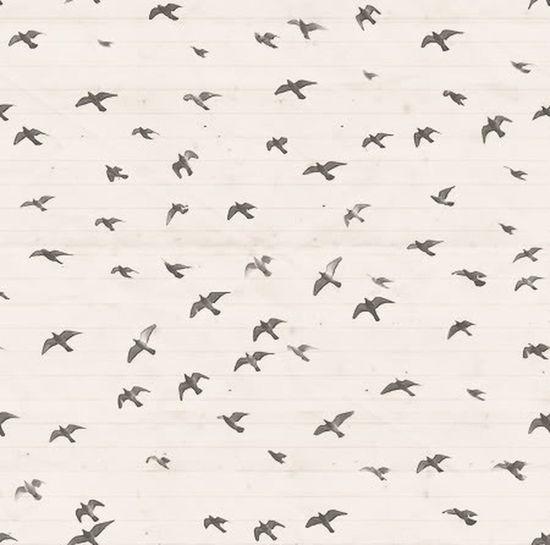 Wallpaper Birds Black And White NEM Black&white