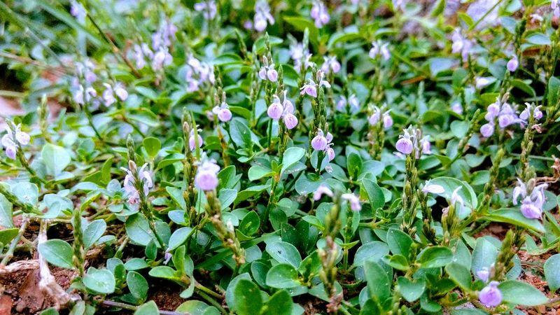 Tiny Flower beauty God's wonderful creations Perfection