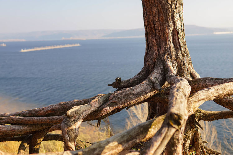 Close-up of driftwood on tree trunk at beach