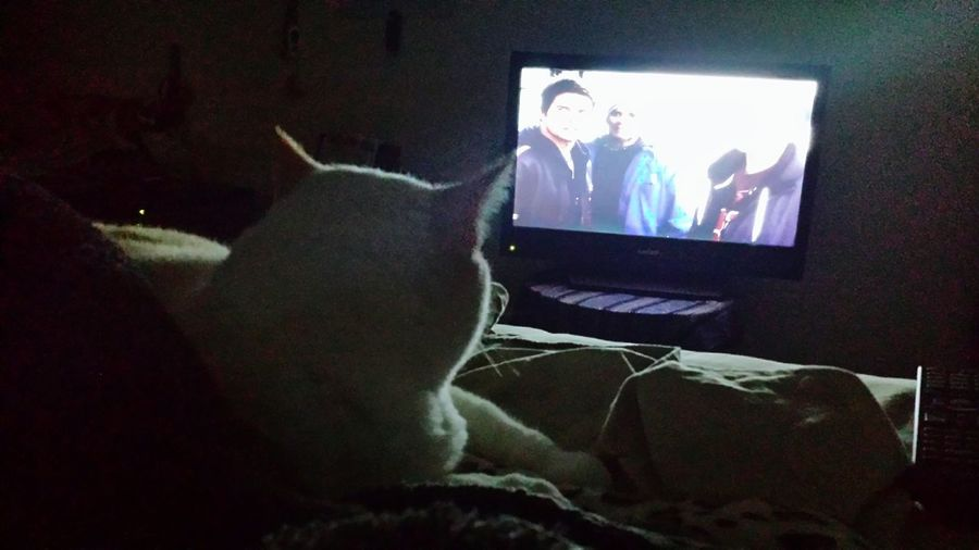 Al Bino Likes Watching Tv Watching A Movie Funny Kitty Hanging Out Relaxing Check This Out Boots N Jeans Gal💝 Oklahoma Bedtime💛 Enjoying Life Taking Photos Hello World Eyeemphotography Eyeem Best Photos Random Photo Time Perspective EyeEm Best Shots Hanging Out Tranquil Scene Puss In Bed