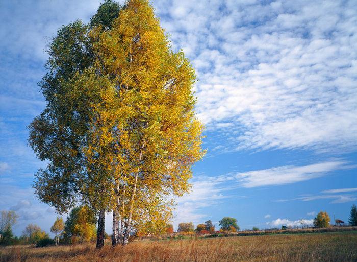 Tree against sky