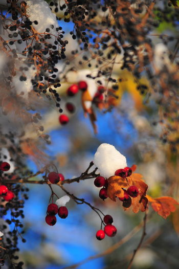 Beauty In Nature Branch Close-up Day Focus On Foreground Freshness Fruit Nature No People Outdoors Tree