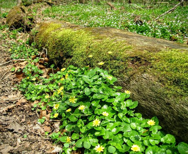 Fresh On Eyeem  The Great Outdoors With Adobe Nature Flowers In Bloom Bloom Moss Moss On A Log Woodlands Woodland Flowers Yellow Flowers Nature's Diversities The Great Outdoors - 2016 EyeEm Awards The Colour Of Life