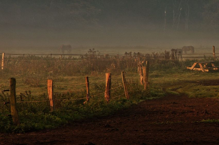 Scenic View Fog Horse Horses Horse Photography  Field No People Outdoors Domestic Animals Agriculture Landscape Wooden Post Animal Themes Nature Tree Grass Forest Fire