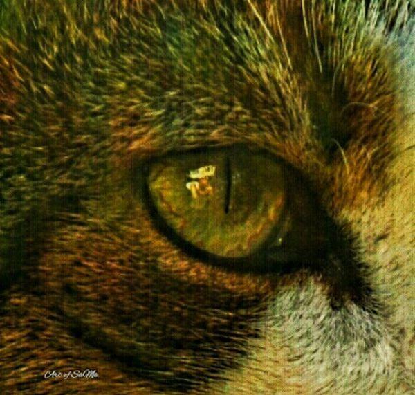 My Art Eyem Animal Lovers Cats Of EyeEm Animal Photography EyeEm Animal Lover Sweet Cat Cateyes EyeEm Best Shots CatEye Eyemcat