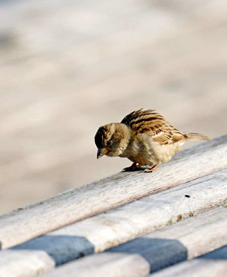 High angle view of bird perching on wood
