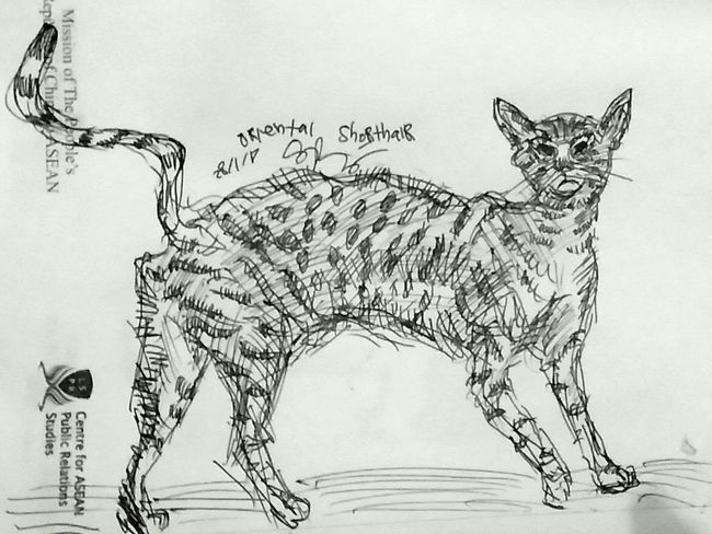 No People Text Close-up Drawing - Art Product Indoors  Day Oriental Shorthair Feline Feline Portraits Cats
