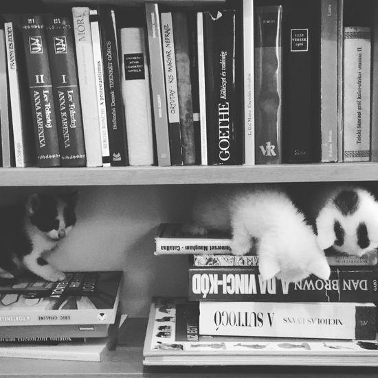 Kitty vs books