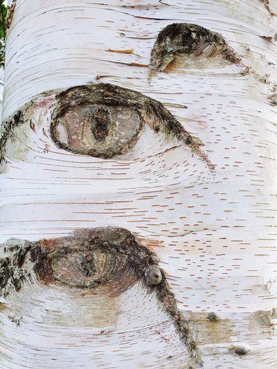 Full frame shot of a tree trunk