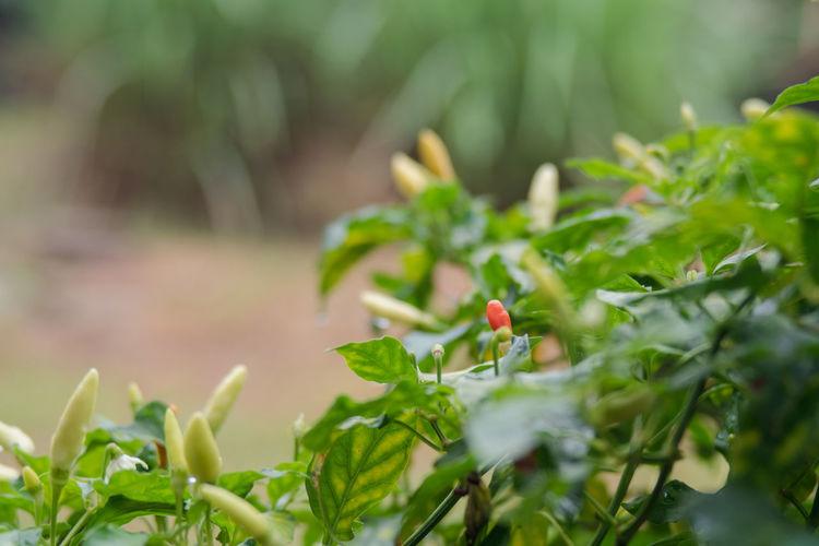 Close-up of a ladybug on plant