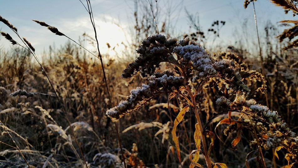 утро солнце изморозь ноябрь осень2017 красотавобычном 8ноября2017 Sunshine November Autumn🍁🍁🍁 Autumn Лес Forest Beauty In Nature Природа Nature EyeEm Ready   AI Now EyeEmNewHere Shades Of Winter