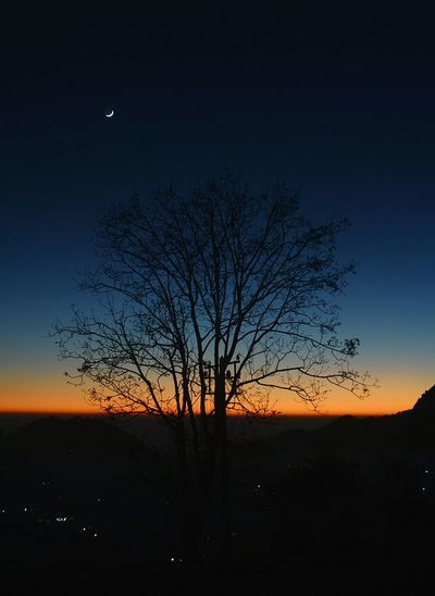 Silhouette bare tree on field against sky at night