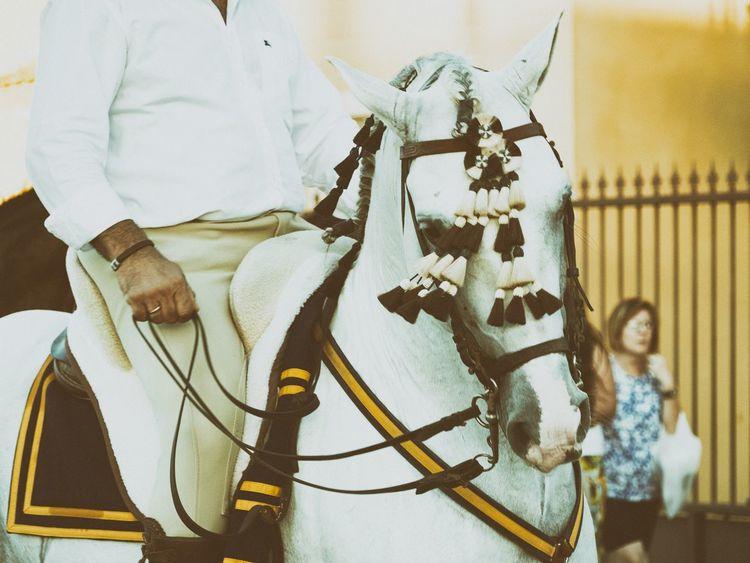 Animal Themes Bridle Close-up Festivity Fiesta Fiestas Focus On Foreground Folk Festival Folklore Horse Horse Photography  Horseman Mount Ornaments Rein Romeria Selective Focus