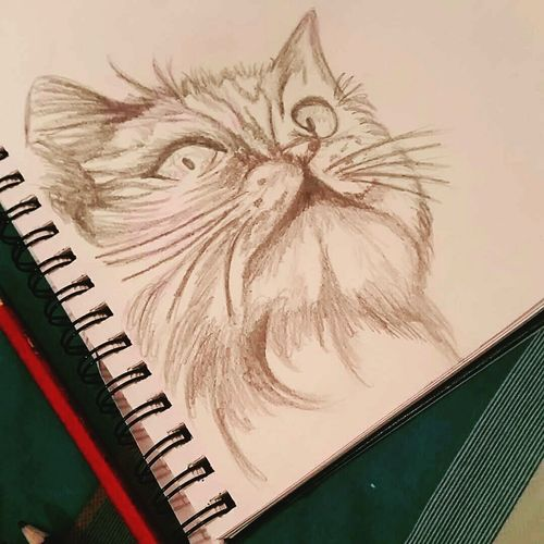 Drawing Cat Drawing Design Art