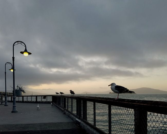 Seagull perching on railing by sea against sky
