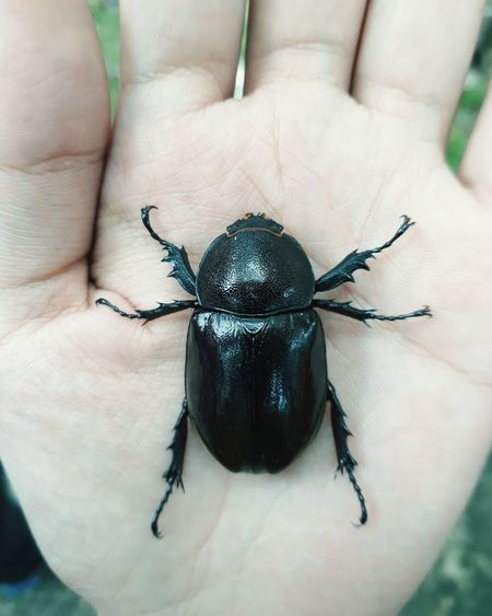 Insect One Animal Human Body Part Animal Themes Close-up Human Hand Animal Wildlife Day Outdoors Nature Photography Bugs_life Insect Close-up