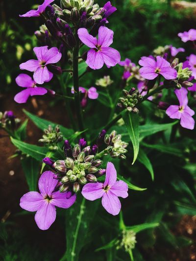 Trakya Photooftheday Photography Life Flowers,Plants & Garden Flower Collection Spring 2016 Flowers Nature Springtime Purple Flower