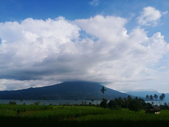 Sommergefühle Ranaulake Field Cloud - Sky Agriculture Social Issues Sky No People Tree Day Nature Outdoors Rural Scene Landscape Irrigation Equipment Freshness Rice Paddy Beauty In Nature Ranau Lake Southsumatera Lampung 2 Province INDONESIA