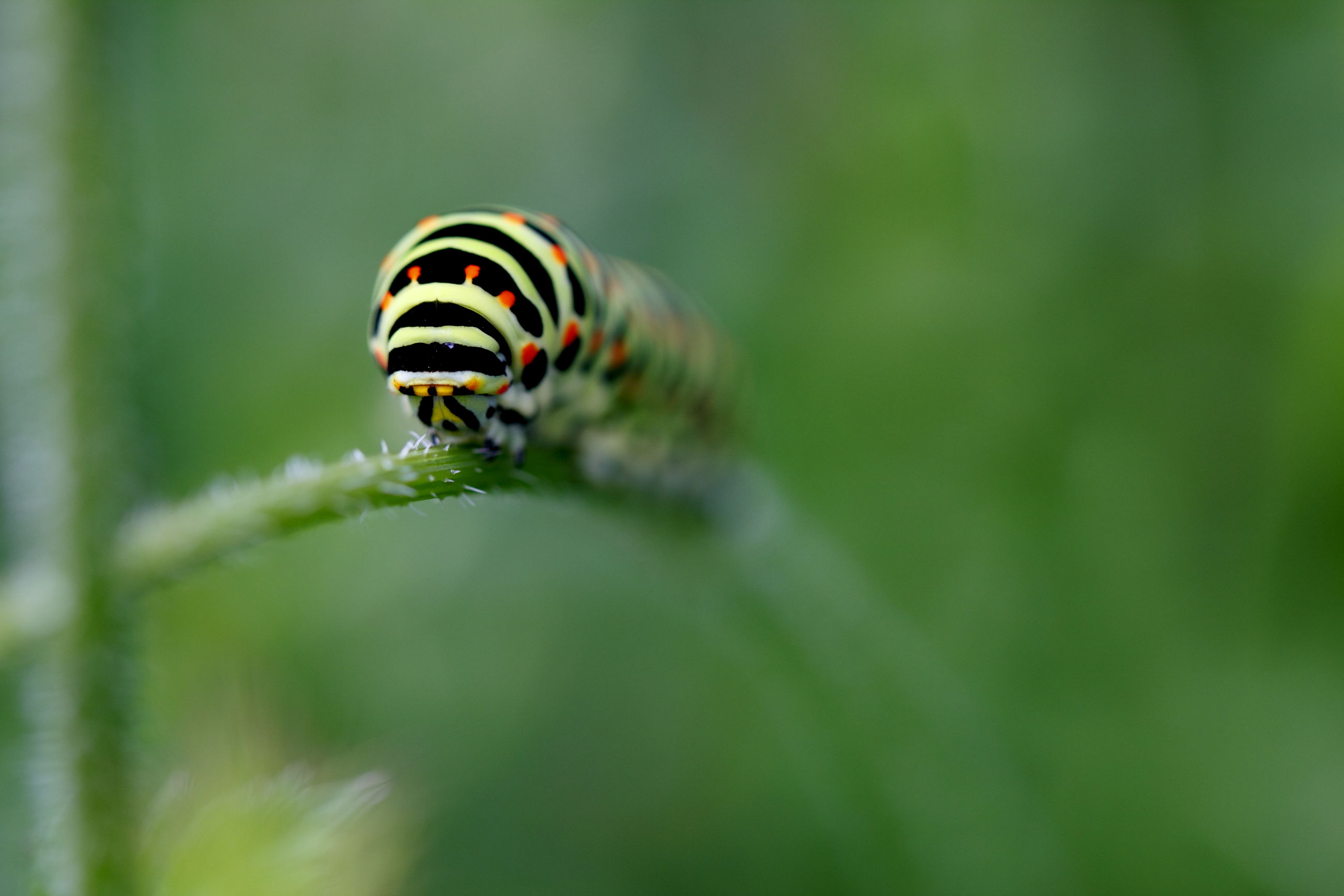 animal themes, animal, animal wildlife, green, one animal, wildlife, insect, nature, close-up, macro photography, plant, no people, beauty in nature, selective focus, flower, grass, day, outdoors, focus on foreground, ladybug, striped, plant part, beetle, macro, animal markings, leaf