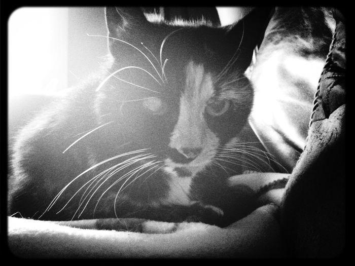 Don't take life so seriously Callie! First Eyeem Photo