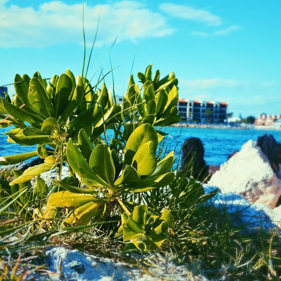 Leaves grace this beachy place The Great Outdoors - 2016 EyeEm Awards Beach Sand Leaves Sun plant
