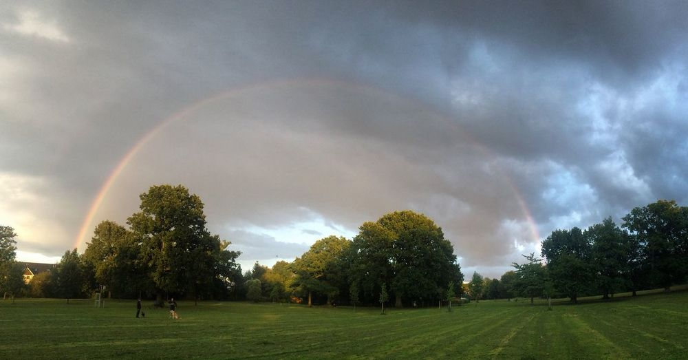 Full rainbow Happy WOW Field Bushey Park Bushey King George's Rainbow🌈 Rainbow Tree Rainbow Nature Beauty In Nature Cloud - Sky Tranquility No People Growth Sky Freshness Grass Outdoors Day