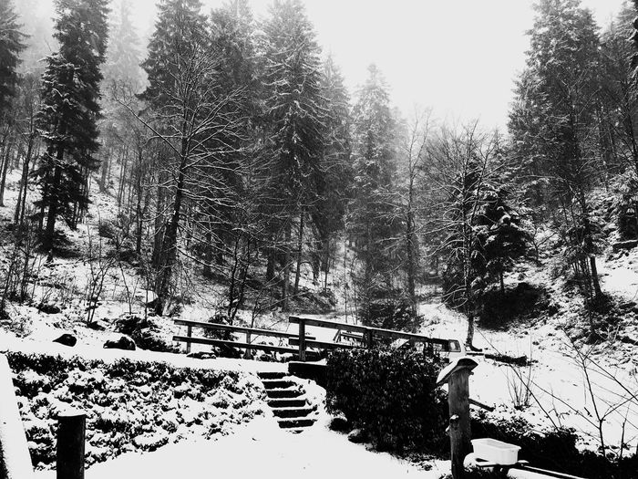 Winter in the German mountains Tranquility Cold Temperature Outdoors Shades Of Winter