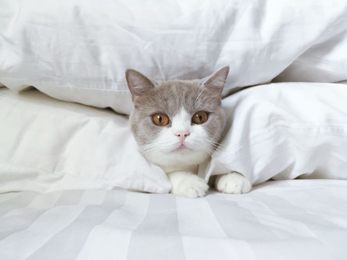 Portrait Of Cat On Bed