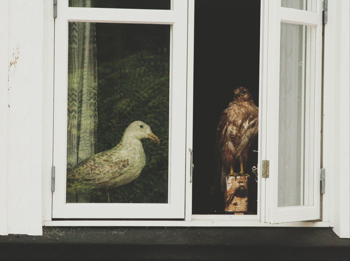 View of an animal on window sill