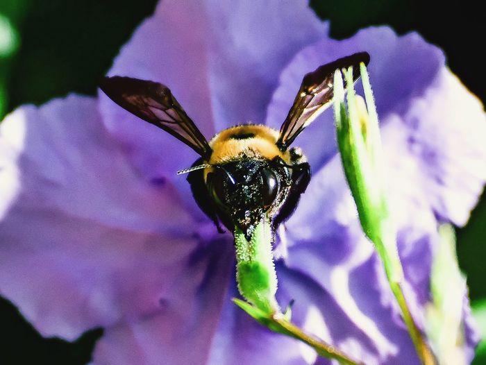 Macro shot of bee on flower