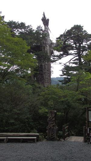 Yakushima,japan 屋久島 紀元杉 Deautiful Natural